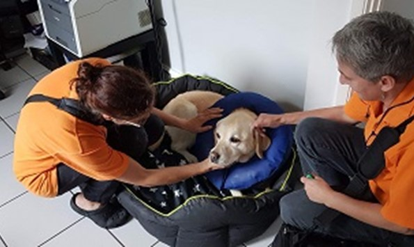 Karen Burton and Billa Schleicher from All Pets Vet Care tending to a pet during an at-home visit.